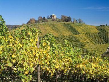 Grabkapelle auf dem Württemberg, dort wachsen Weintrauben